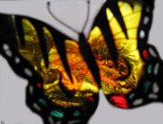 The View Of Art Mixed Media - Butterfly Floral Collection  by Debra     Vatalaro