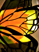 Fluttering Digital Art - Butterfly Florals  Collection C by Debra     Vatalaro