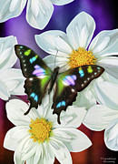 Song Birds Metal Prints - Butterfly Flowers Metal Print by JQ Licensing