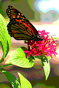 Fushia Digital Art - Butterfly Flowers by Peggy Starks