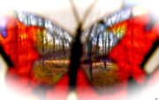 Outlook Framed Prints - Butterfly Forest Q Framed Print by Debra     Vatalaro