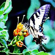 Barry Jones - Butterfly Haven