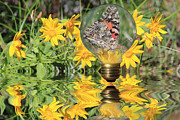 Glass Reflecting Metal Prints - Butterfly In A Bulb II - Landscape Metal Print by Shane Bechler