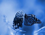 Blue - Butterfly In Blue by Angie McKenzie