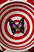 Insects Posters - Butterfly in circle bowl Poster by Garry Gay