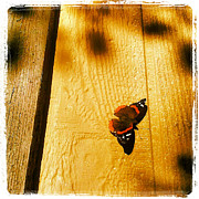 Instagram Posters - Butterfly in the Afternoon Sun Poster by Tony Ramos