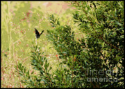 Shades Of Green Posters - Butterfly in the Marsh - Digital Painting Poster by Carol Groenen