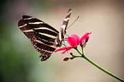 Garden Petal Image Photos - Butterfly by Kati Molin