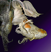 Butterfly Koi Flip Print by Janna Morrison