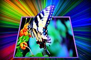 Barry Jones - Butterfly Landing Pad