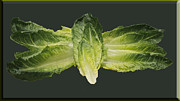Fresh And Healthy Prints - Butterfly Lettuce Print by LeeAnn McLaneGoetz McLaneGoetzStudioLLCcom