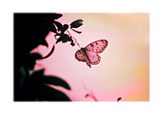Pupa Prints - Butterfly Print by Mal Bray