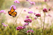 Flying Bugs Posters - Butterfly - Monarach - The sweet life Poster by Mike Savad