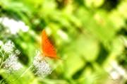 Barry Jones - Butterfly Morning