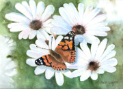 Floral Paintings - Butterfly On A Daisy by Arline Wagner