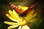 Yellow Bugs Prints - Butterfly on a Daisy  Print by Saija  Lehtonen