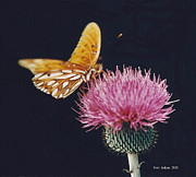 Bull Thistle Posters - Butterfly on Bull Thistle Poster by Fred Jinkins