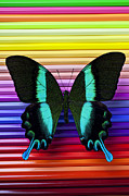 Insects Metal Prints - Butterfly on colored pencils Metal Print by Garry Gay