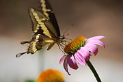 All - Butterfly on Flower by Kimberly Gonzales
