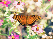 Butterfly Prints - Butterfly  On Flowers Print by Joel Olives Photography