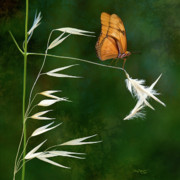 Butterfly Digital Art - Butterfly on grass by Thanh Thuy Nguyen