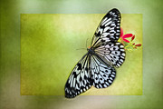 Fly Photos - Butterfly on Green by Rebecca Cozart