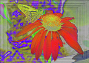 Cone Flower Digital Art Posters - Butterfly on Red Framed Poster by Larry Bishop