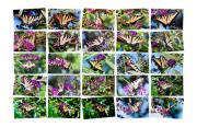 Flight Posters - Butterfly Plethora I Poster by Gary Adkins