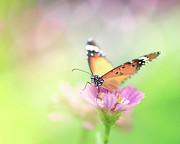Vibrant Metal Prints - Butterfly Rainbow Metal Print by Sharon Lapkin