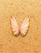 Sea Shell Painting Prints - Butterfly Sea Shell Print by Katherine Young-Beck