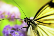 Light Photos - Butterfly by Sebastian Musial