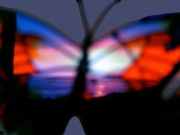 Outlook Mixed Media Posters - Butterfly Sunsets Collection  Poster by Debra     Vatalaro