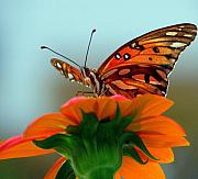 Photograpy Metal Prints - Butterfly View Metal Print by Dottie Dees