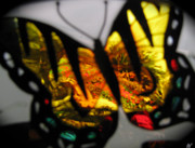Colorers Of Fall Photo Prints - Butterfly Wings  Collection  B Print by Debra     Vatalaro