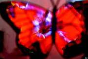 Outlook Framed Prints - Butterfly Wings  Collection I Framed Print by Debra     Vatalaro
