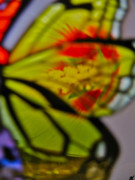 Colorers Of Fall Photo Prints - Butterfly Wings  Collection J Print by Debra     Vatalaro