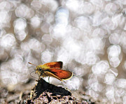 Defocused Prints - Butterfly With Bokeh Light Print by © Yannick Lefevre - Photography