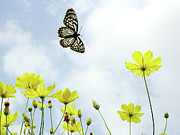 Low Angle View Prints - Butterfly With Flowers Print by Adegsm
