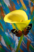 Calla Details Prints - Butterfly with single yellow calla lily Print by Garry Gay