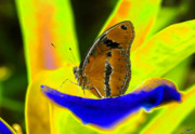 Abstract Insect Prints - Butterfly Works Number 10 Print by David Lee Thompson