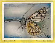 Adult Pastels Framed Prints - Butterflycomp 1991 B Framed Print by Glenn Bautista