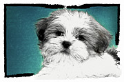 Puppy Digital Art Framed Prints - Button Nose Framed Print by Tilly Williams