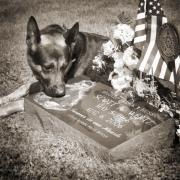 Pet Photo Metal Prints - Buy a print. Show your support for Reading K9 Police.  Willow Street Pictures.  Metal Print by Darren Modricker