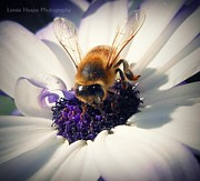 Senetti Photo Posters - Buzz Wee Bees lll Poster by Lessie Heape