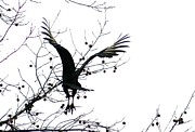 Turkey Pyrography Metal Prints - Buzzard Silhouette Metal Print by Valia Bradshaw