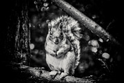 Acorn Digital Art - bw 424 - Hello HDR by Chris Berry