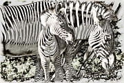 Myeress Framed Prints - BW Zebra Framed Print by Joe Myeress