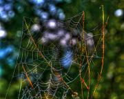 Spider Mixed Media - By Designe-3 by Robert Pearson