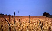 Wheat Acrylic Prints - By the Highway 2 Acrylic Print by Lyle Crump