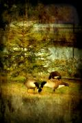 Geese Digital Art Posters - By The Little Tree - Lake Carasaljo Poster by Angie McKenzie